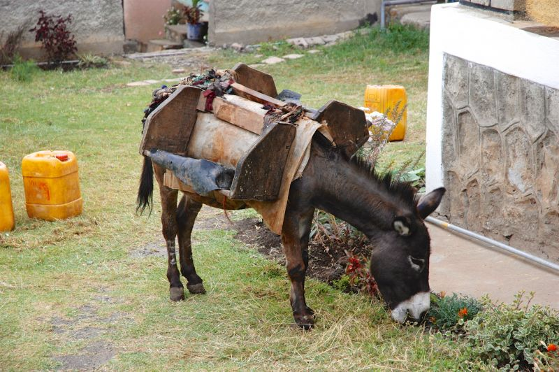 Give a Donkey - Holt International Gifts of Hope