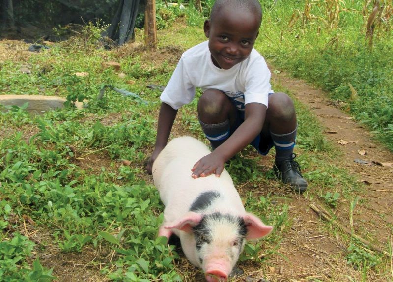 Give a Pig - Holt International Gifts of Hope