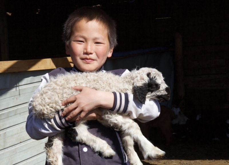 Give Sheep - Holt International Gifts of Hope