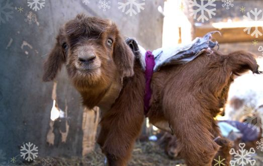 Christmas Gifts of Hope Animals