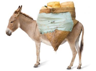 Share of a Donkey