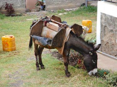 Give A Donkey